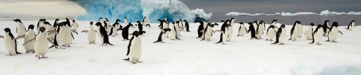 Antarctic Macquarie Island Voyage Heritage Expeditions
