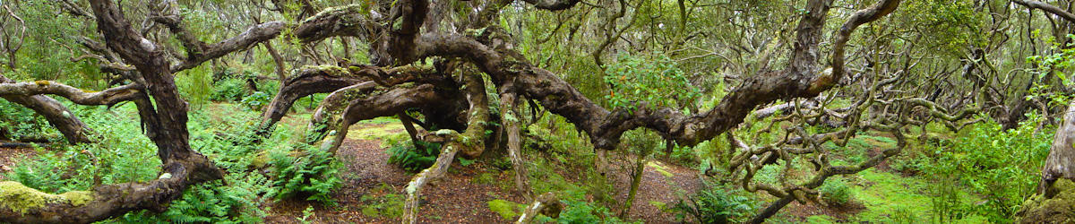 (c) kwells southern rata forest on enderby island