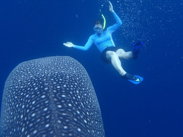 Swimming with Whale Shark, Indonesia_(c) D.Brown