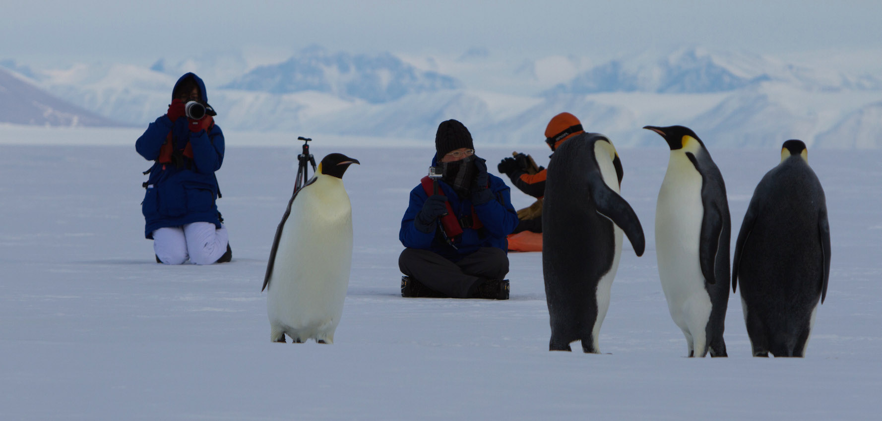 Ross Sea Antarctic Cruising: In the Wake of Scott & Shackleton 10 Jan 2020
