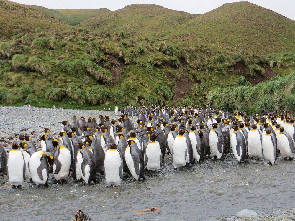 Alison, Australia (Travelled Dec 2012)'s photo from Macquarie Island Expedition: Galapagos of the Southern Ocean 22 Dec 2019