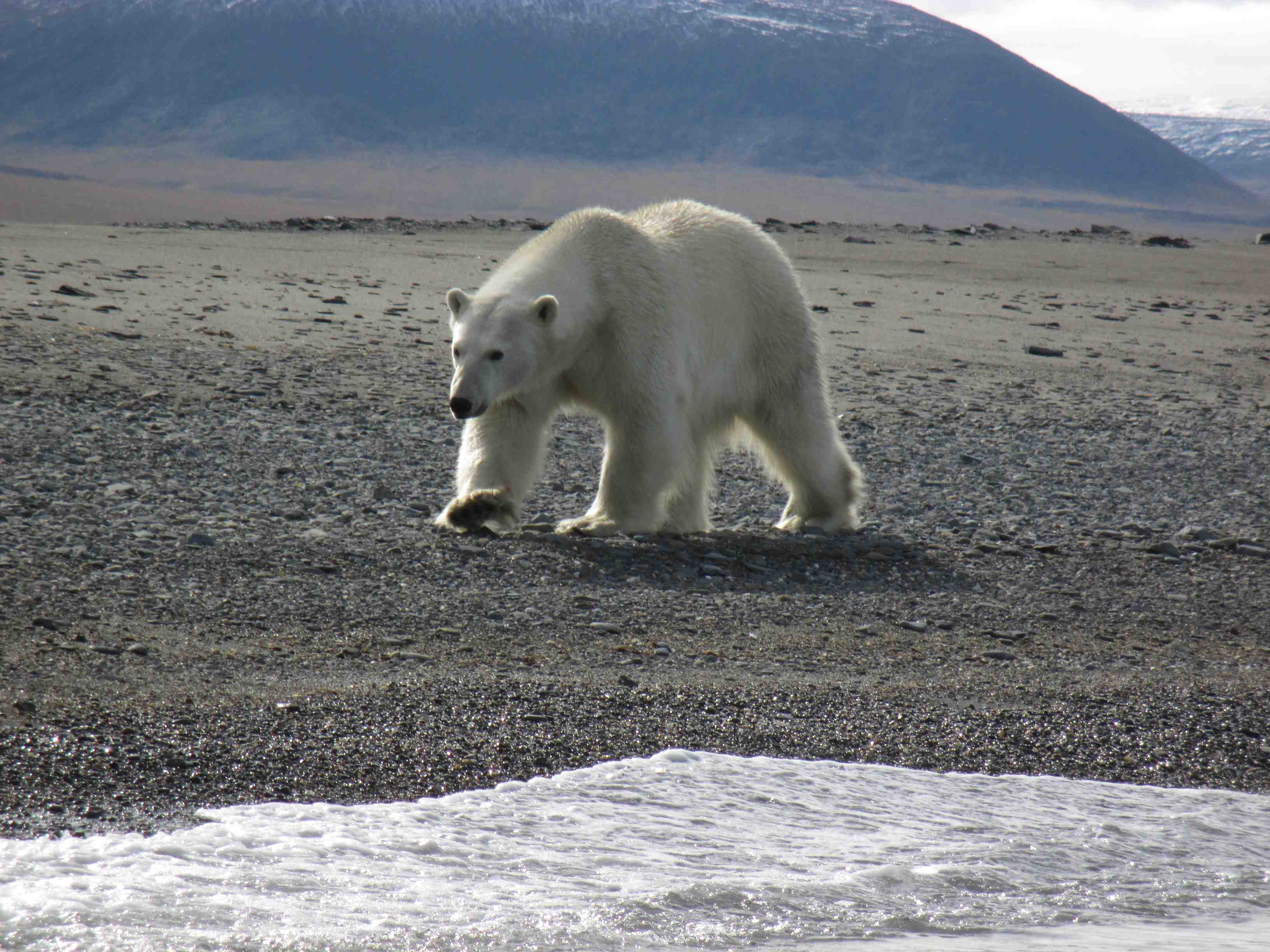 Paul and Jacquie Pryor's photo from Wrangel Island: Across the Top of the World 20 August 2018