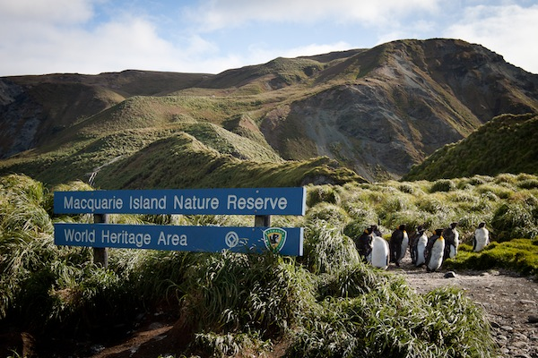 1370 Katya Ovsyanikova Buckles Bay Macquarie Island