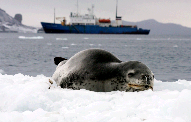 © MHolland Leopard Seal and ship Cape Royds