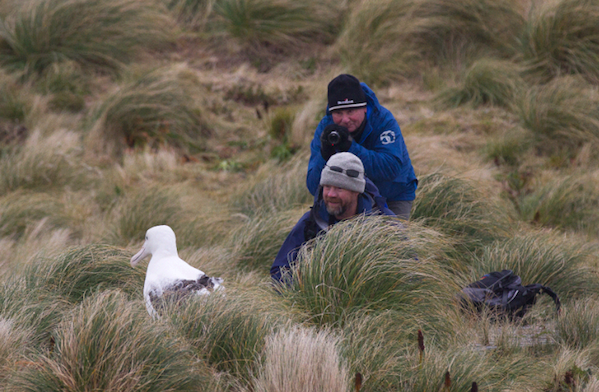 © KOvsyanikova 1471 Expeditioners and Albatross Campbell Island