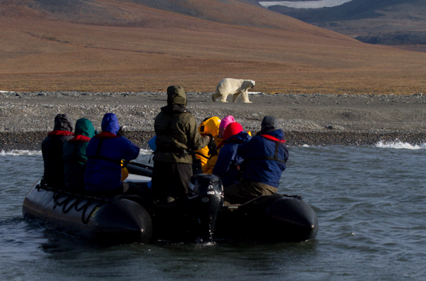 POlar Bear Spotting from Zodiac Wrangel Island
