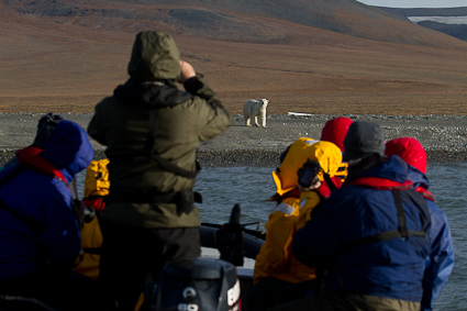 Polar Bear Viewing