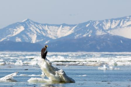 Sea of Okhotsk: Seals, Seabirds and a Legacy of Sorrow 9 June 2020