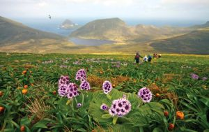 Subantarctic Islands: Forgotten Islands of the South Pacific 15 December 2015