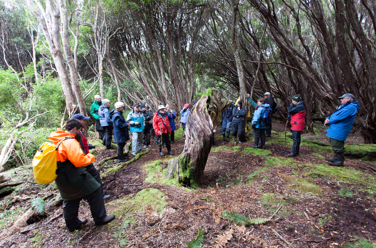 (c) SBlanc Forest at Auckland Islands
