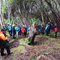 Auckland Islands Forest
