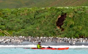 Macquarie Island Expedition: Galapagos of the Southern Ocean 3 December 2015