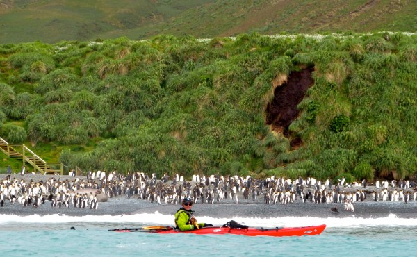 Macquarie Island Expedition: Galapagos of the Southern Ocean 29 Nov 2018
