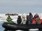 Wrangel Island: Across the Top of the World 6 July 2020
